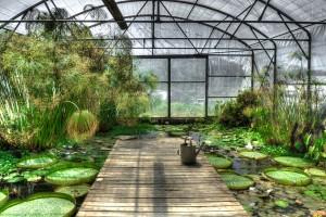 lotus-greenhouse-free-license-cc0