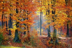 woods-1072819